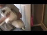 Приколы с кошками нереально смешные коты и котята