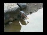 Умная птичка рыбачит